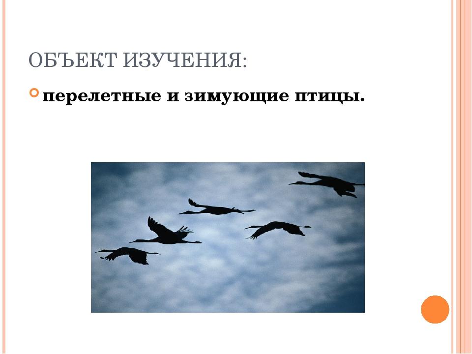 ОБЪЕКТ ИЗУЧЕНИЯ: перелетные и зимующие птицы.