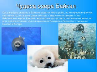 Чудеса озера Байкал Как уже было сказано в Байкале водится много рыбы, но инт