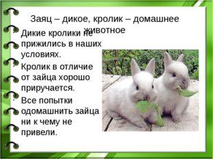 Заяц – дикое, кролик – домашнее животное Дикие кролики не прижились в наших у
