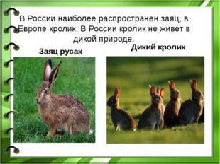 В России наиболее распространен заяц, в Европе кролик. В России кролик не жив