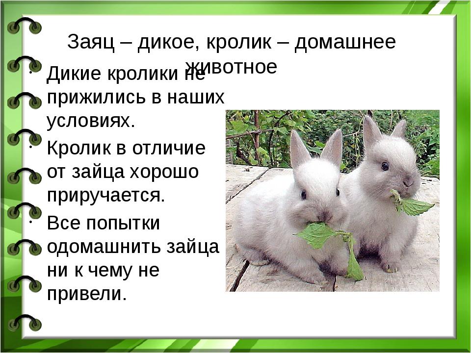 Заяц – дикое, кролик – домашнее животное Дикие кролики не прижились в наших у...