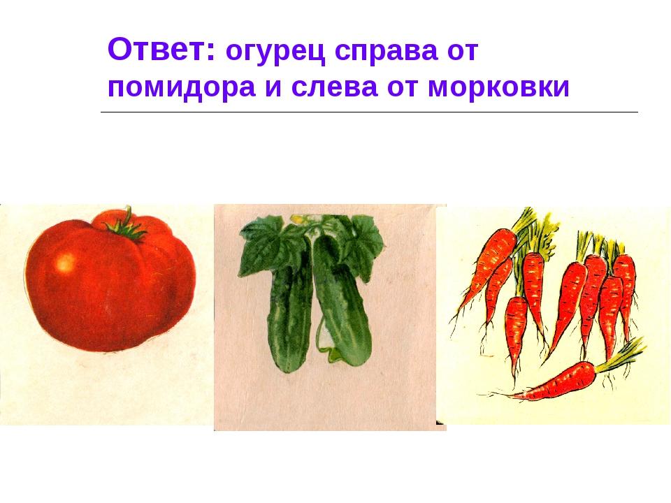 Ответ: огурец справа от помидора и слева от морковки