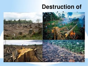 Destruction of rainforests