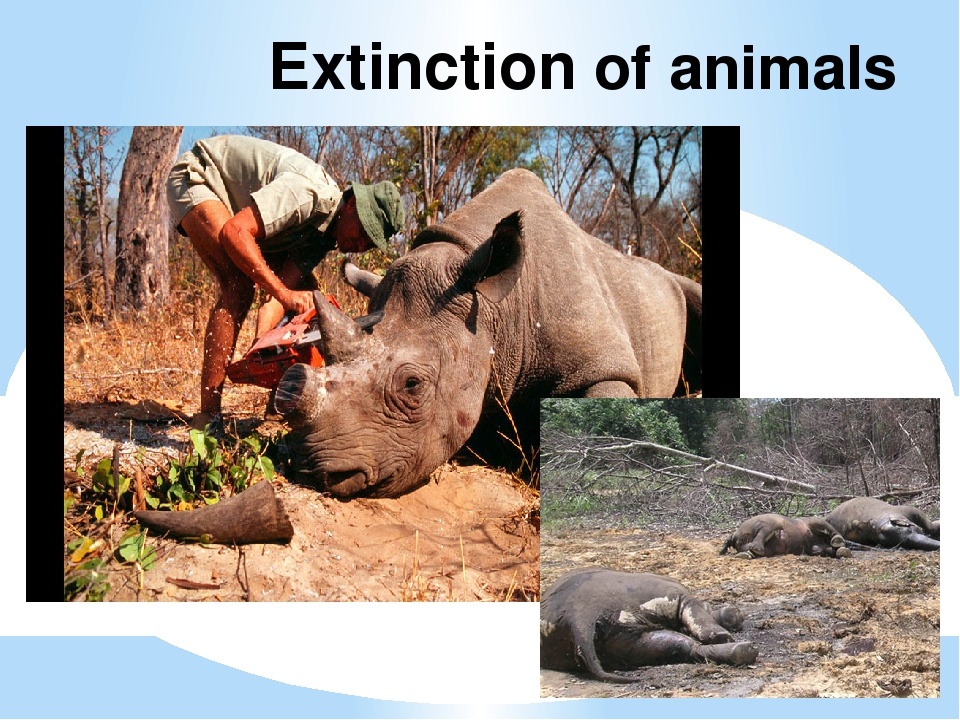 Extinction of animals