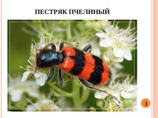 ПЕСТРЯК ПЧЕЛИНЫЙ 3