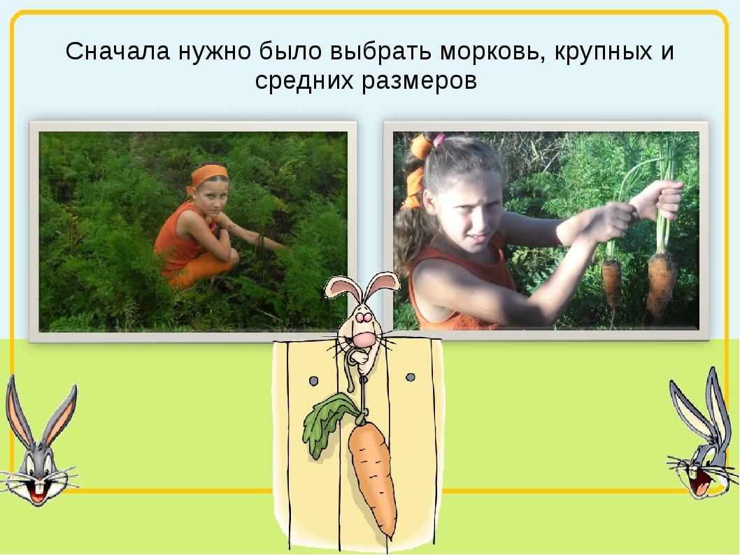 Сначала нужно было выбрать морковь, крупных и средних размеров