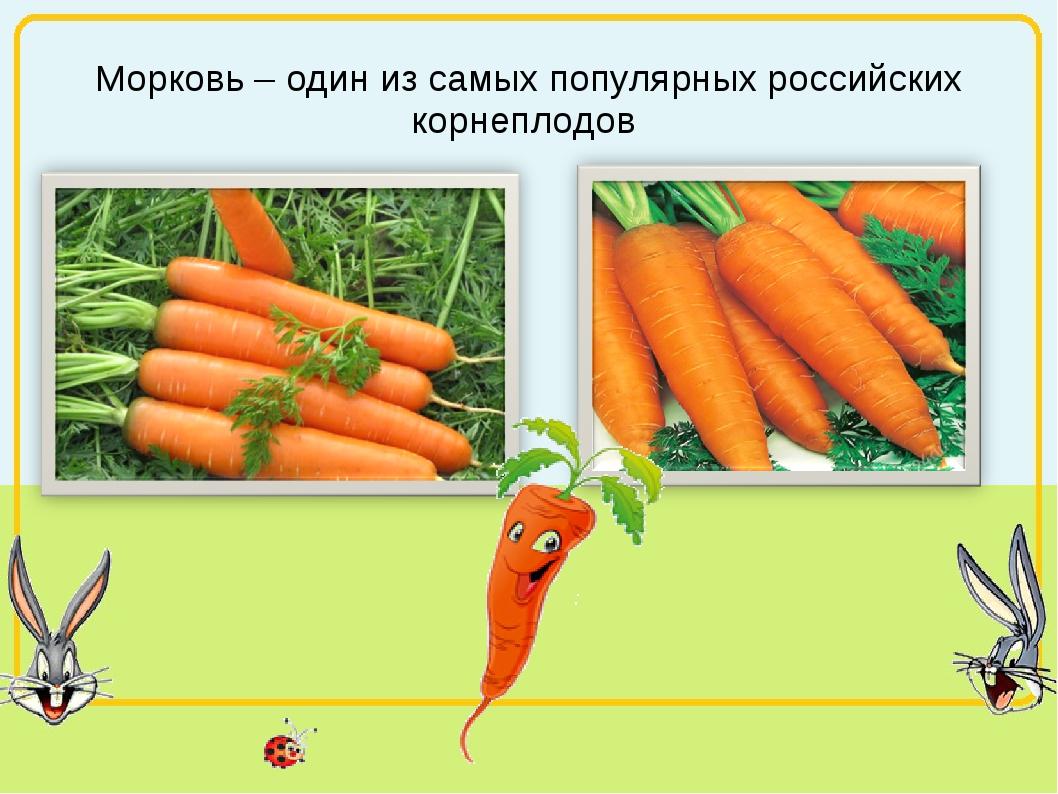 Морковь – один из самых популярных российских корнеплодов