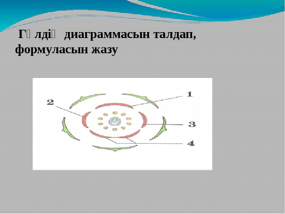 Гүлдің диаграммасын талдап, формуласын жазу