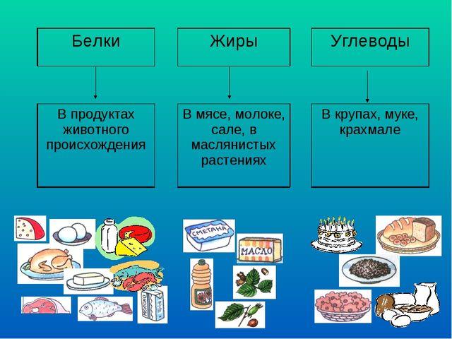 БелкиЖирыУглеводы  В продуктах животного происхожденияВ мясе, молок...