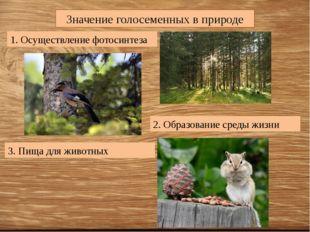 Значение голосеменных в природе 1. Осуществление фотосинтеза 2. Образование с