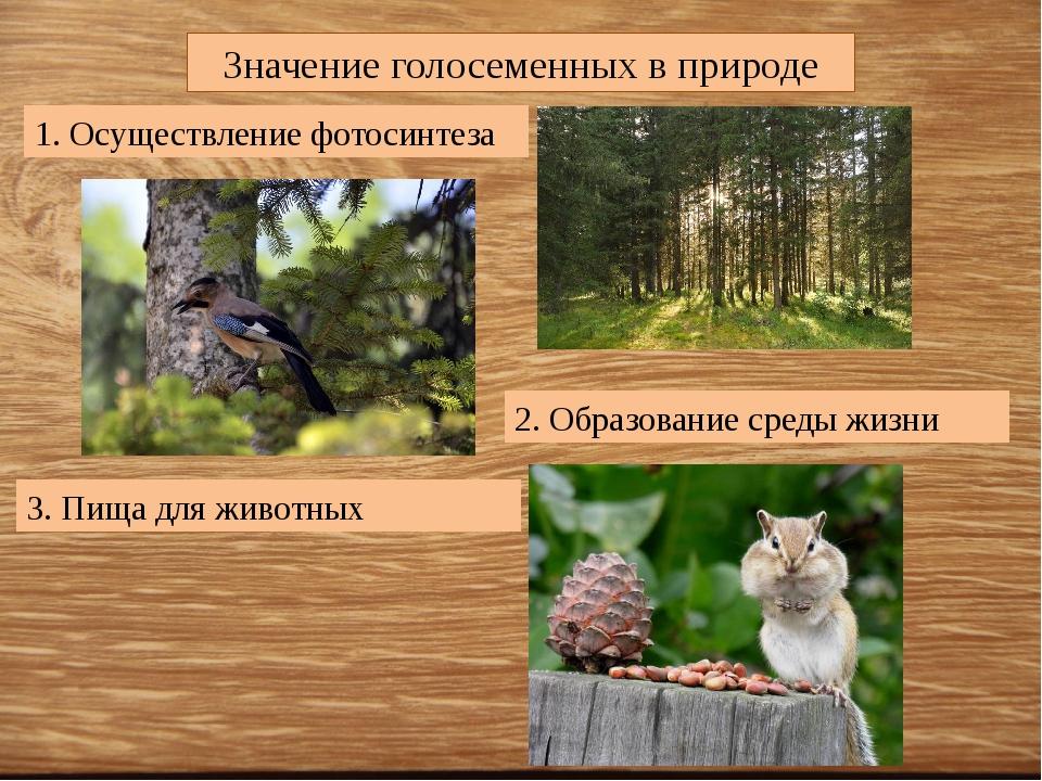 Значение голосеменных в природе 1. Осуществление фотосинтеза 2. Образование с...