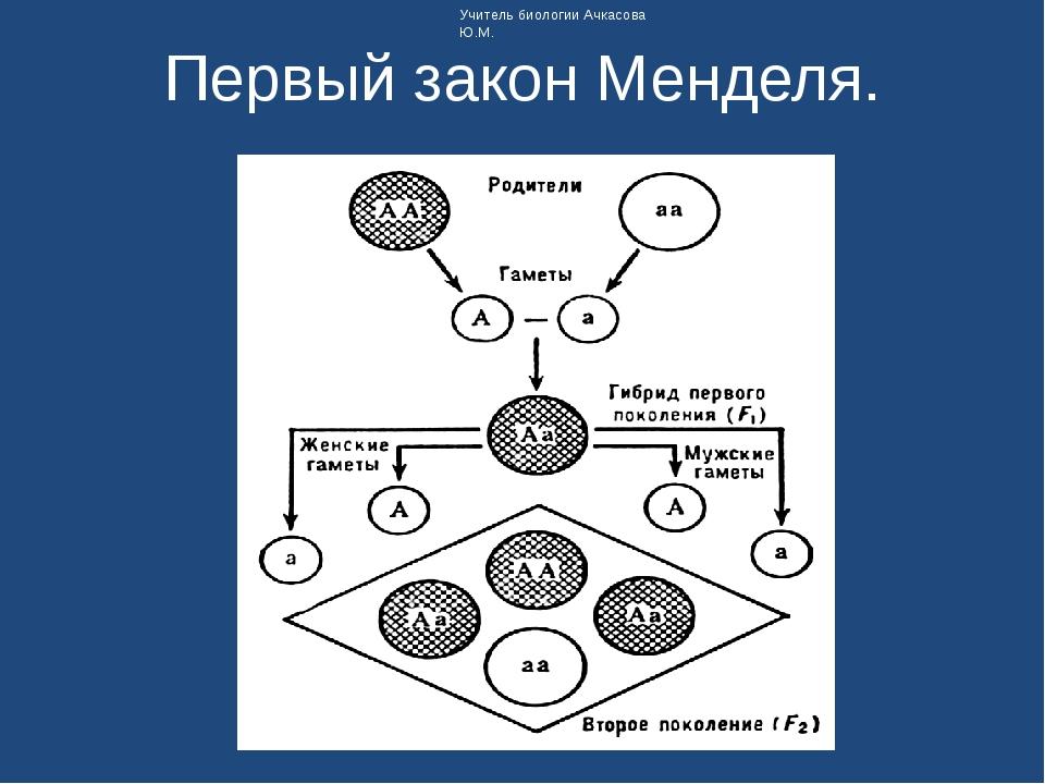 Первый закон Менделя. Учитель биологии Ачкасова Ю.М.