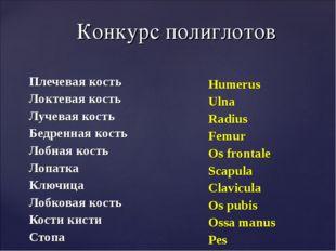 Конкурс полиглотов Плечевая кость Локтевая кость Лучевая кость Бедренная кост