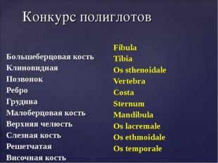 Конкурс полиглотов Большеберцовая кость Клиновидная Позвонок Ребро Грудина Ма