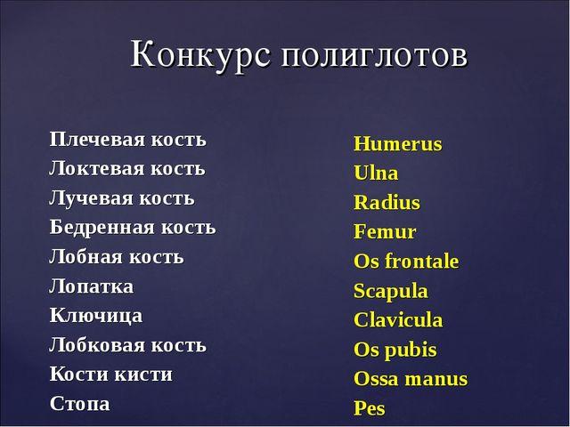 Конкурс полиглотов Плечевая кость Локтевая кость Лучевая кость Бедренная кост...