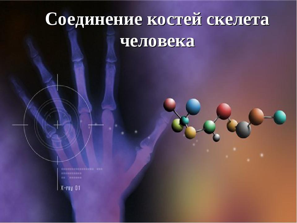 Соединение костей скелета человека