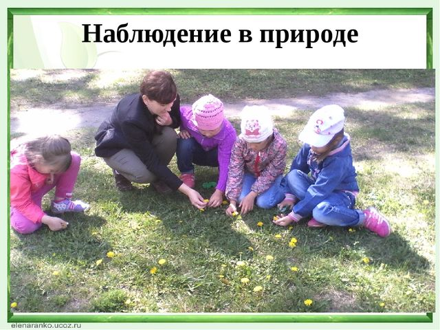 Наблюдение в природе