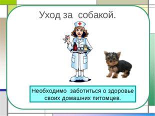 Уход за собакой. Необходимо заботиться о здоровье своих домашних питомцев.