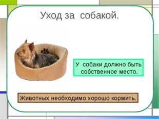 Уход за собакой. У собаки должно быть собственное место. Животных необходимо