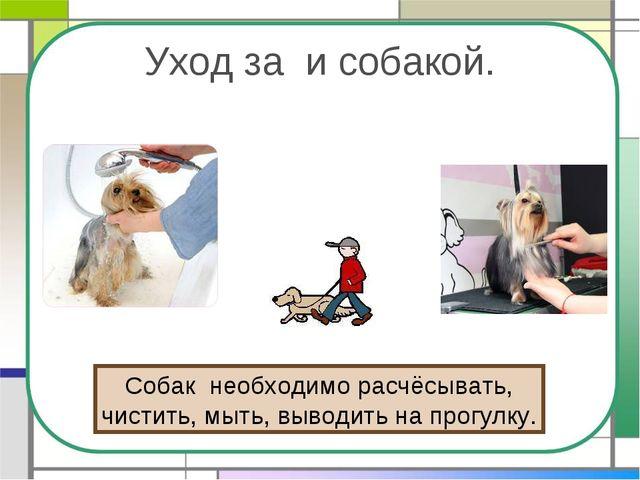 Уход за и собакой. Собак необходимо расчёсывать, чистить, мыть, выводить на п...