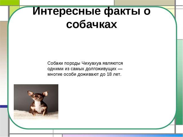 Интересные факты о собачках Собаки породы Чихуахуа являются одними из самых д...