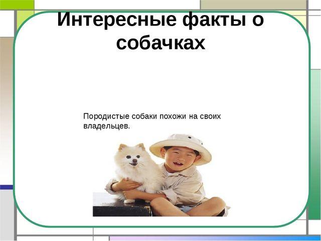 Интересные факты о собачках Породистые собаки похожи на своих владельцев.