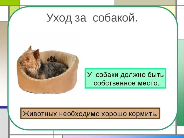 Уход за собакой. У собаки должно быть собственное место. Животных необходимо...
