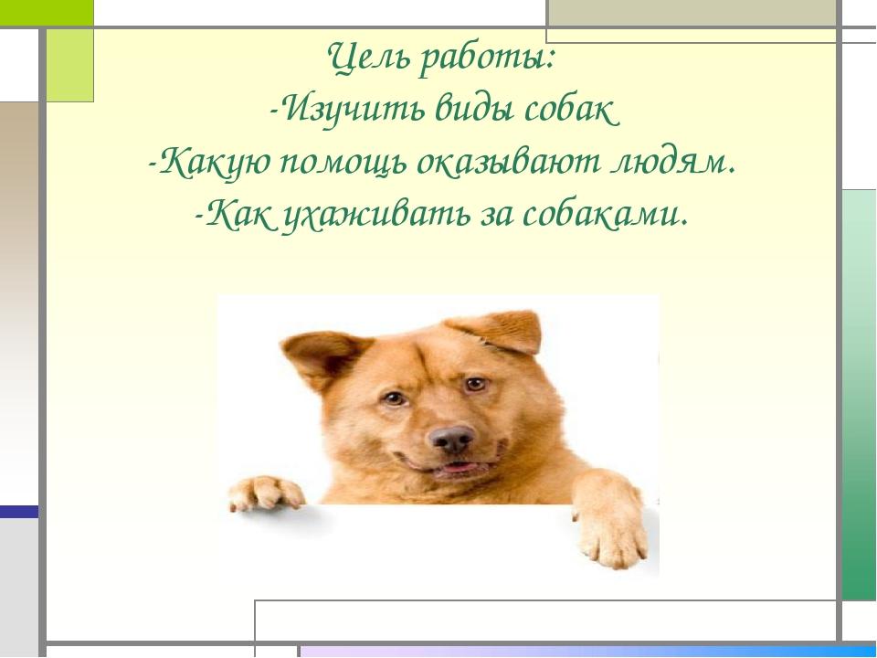 Цель работы: -Изучить виды собак -Какую помощь оказывают людям. -Как ухаживат...