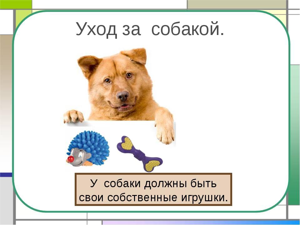 Уход за собакой. У собаки должны быть свои собственные игрушки.