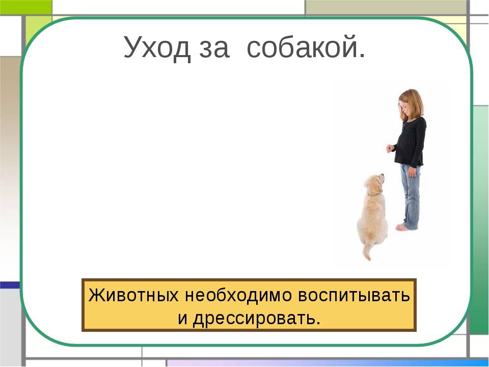 Уход за собакой. Животных необходимо воспитывать и дрессировать.