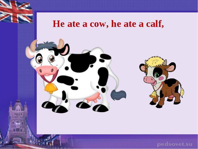 He ate a cow, he ate a calf,
