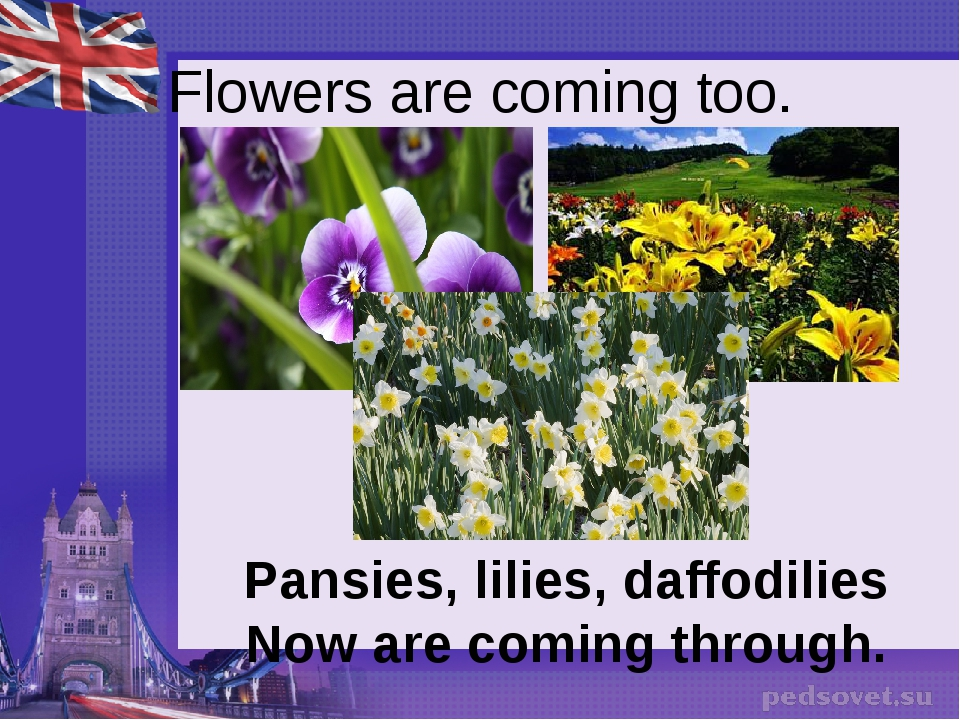 Flowers are coming too. Pansies, lilies, daffodilies Now are coming through.