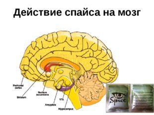 Действие спайса на мозг