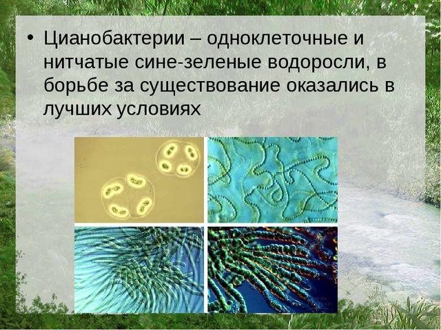 Цианобактерии – одноклеточные и нитчатые сине-зеленые водоросли, в борьбе за...