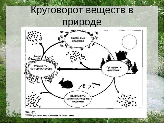 Круговорот веществ в природе