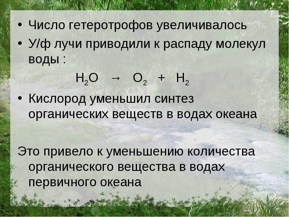 Число гетеротрофов увеличивалось У/ф лучи приводили к распаду молекул воды :...