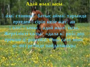 Адай жылқысы Қазақстанның батыс аймақтарында ертеден өсіріп келе жатқан қолт