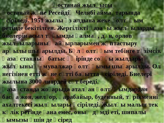 Қостанай жылқысы Қостанай және Ресейдің Челябі аймақтарында өсіріледі. 1951...