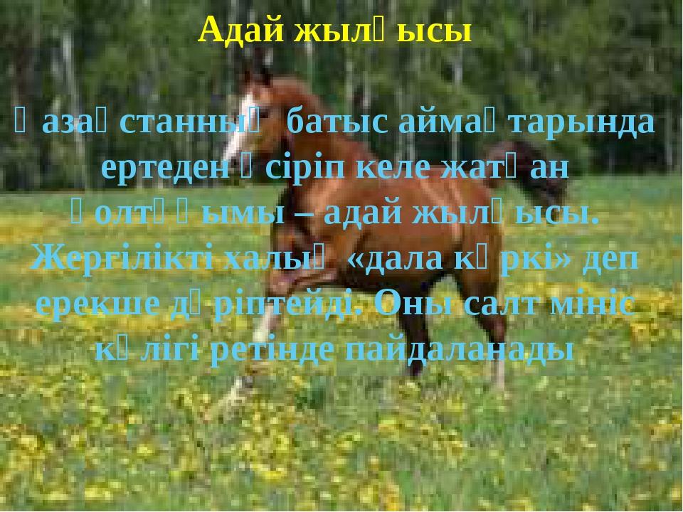 Адай жылқысы Қазақстанның батыс аймақтарында ертеден өсіріп келе жатқан қолт...
