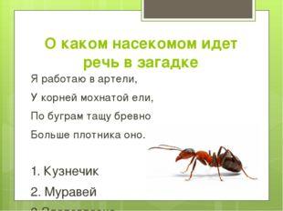 О каком насекомом идет речь в загадке Я работаю в артели, У корней мохнатой е