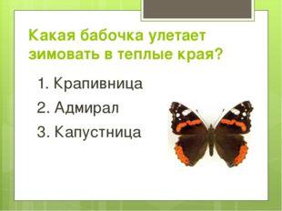 Какая бабочка улетает зимовать в теплые края? 1. Крапивница 2. Адмирал 3. Кап