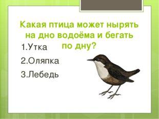 Какая птица может нырять на дно водоёма и бегать по дну? 1.Утка 2.Оляпка 3.Ле