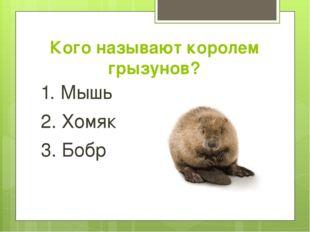 Кого называют королем грызунов? 1. Мышь 2. Хомяк 3. Бобр