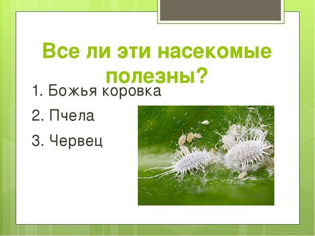 Все ли эти насекомые полезны? 1. Божья коровка 2. Пчела 3. Червец