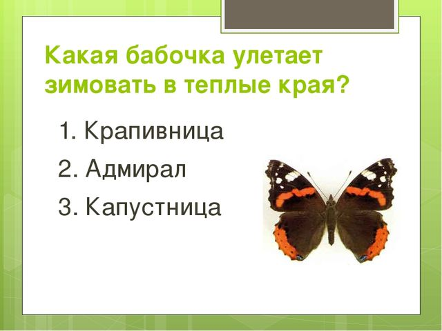 Какая бабочка улетает зимовать в теплые края? 1. Крапивница 2. Адмирал 3. Кап...