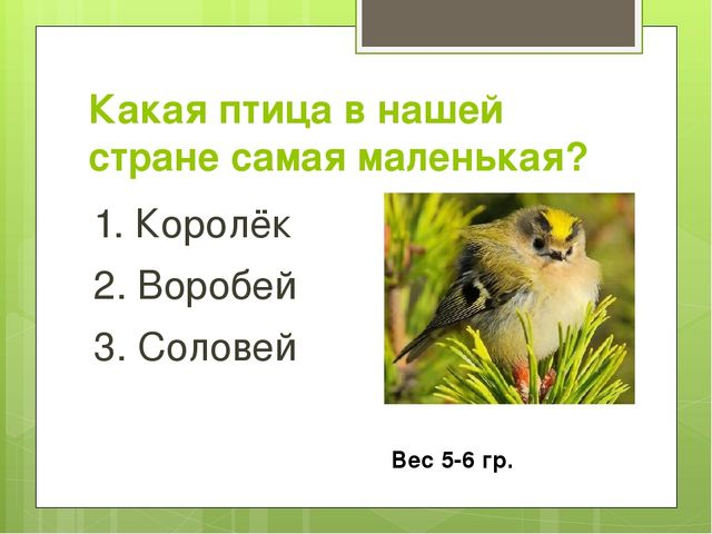 Какая птица в нашей стране самая маленькая? 1. Королёк 2. Воробей 3. Соловей...