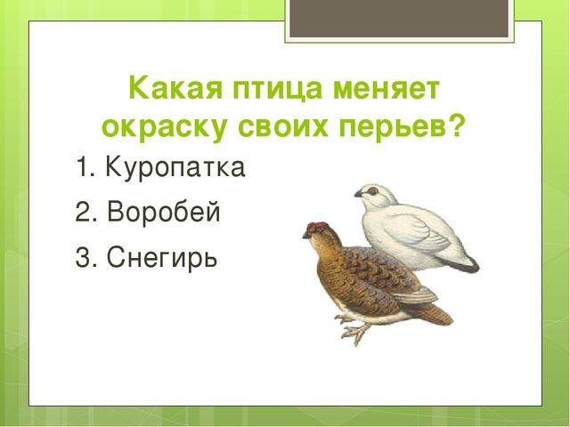Какая птица меняет окраску своих перьев? 1. Куропатка 2. Воробей 3. Снегирь
