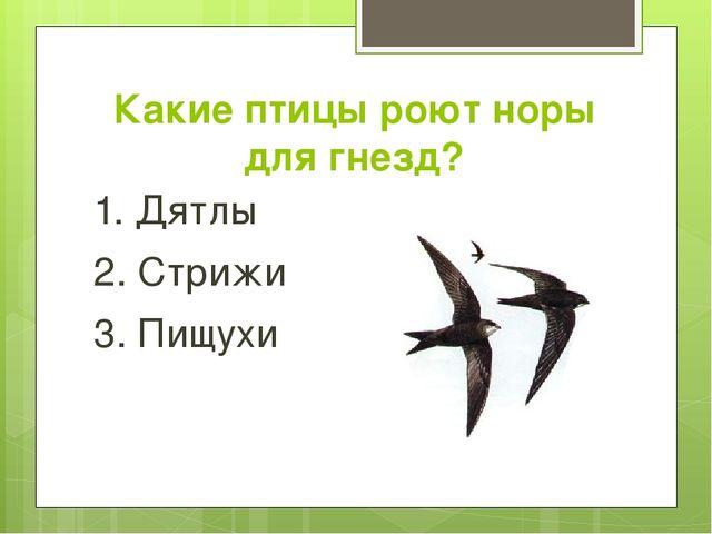 Какие птицы роют норы для гнезд? 1. Дятлы 2. Стрижи 3. Пищухи