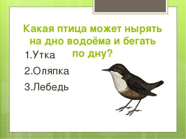 Какая птица может нырять на дно водоёма и бегать по дну? 1.Утка 2.Оляпка 3.Ле...