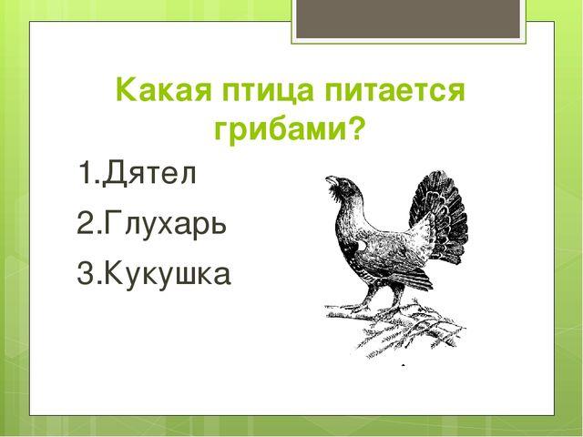Какая птица питается грибами? 1.Дятел 2.Глухарь 3.Кукушка